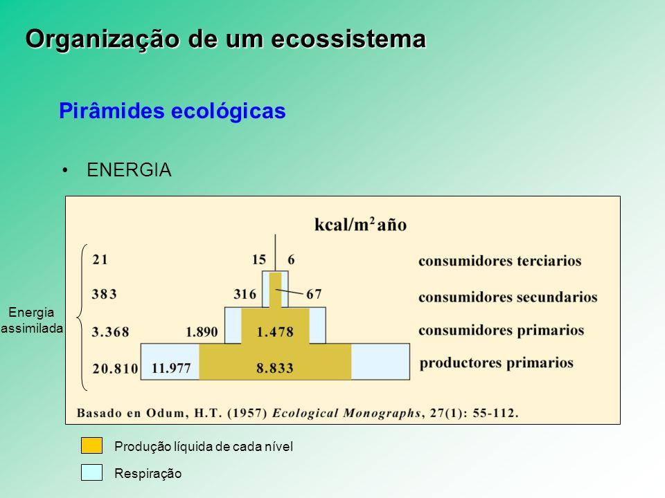 Pirâmides ecológicas ENERGIA Produção líquida de cada nível Respiração Energia assimilada Organização de um ecossistema