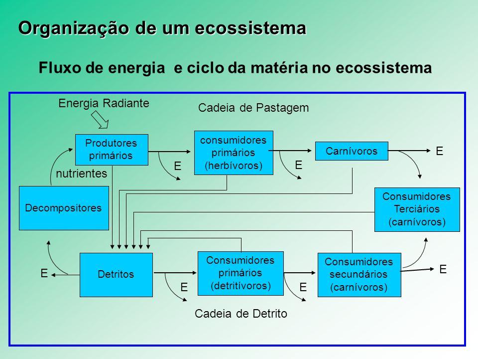Fluxo de energia e ciclo da matéria no ecossistema Produtores primários E consumidores primários (herbívoros) Energia Radiante E Carnívoros E Consumid
