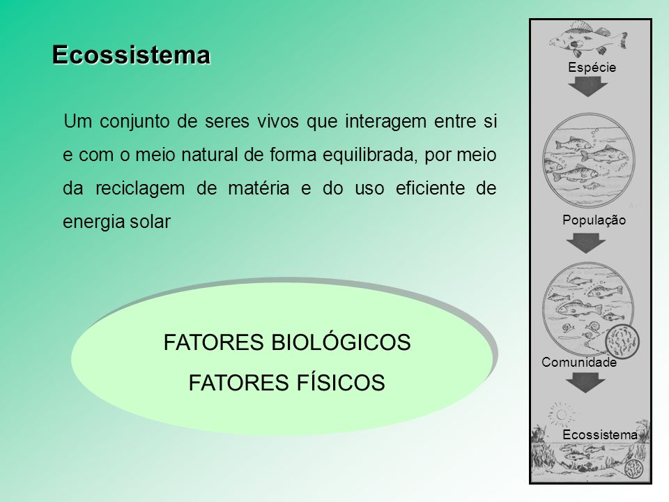 Exemplos de ecossistemas: Uma simples planta constitui um ecossistema O oceano é um ecossistema Um aquário é um ecossistema Uma floresta é um ecossistema Um terrário, exemplifica um ecossistema Ecossistema