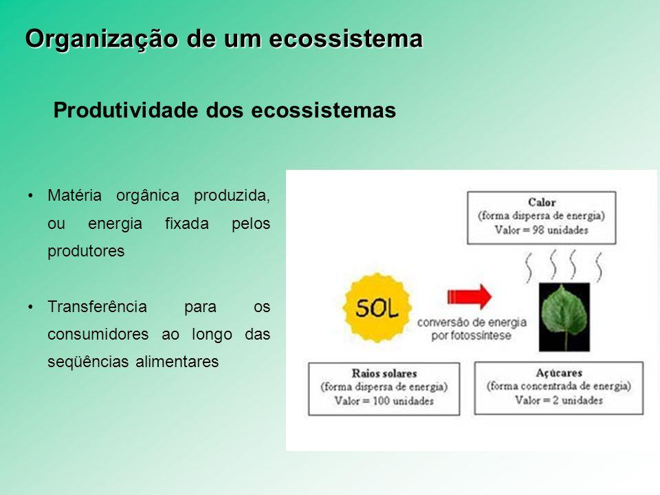 Produtividade dos ecossistemas Matéria orgânica produzida, ou energia fixada pelos produtores Transferência para os consumidores ao longo das seqüênci