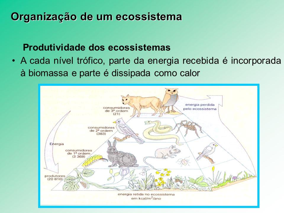Produtividade dos ecossistemas A cada nível trófico, parte da energia recebida é incorporada à biomassa e parte é dissipada como calor Organização de
