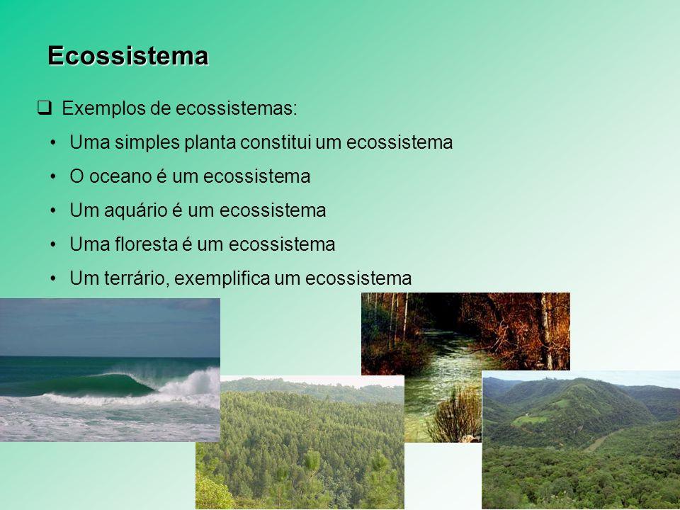 Exemplos de ecossistemas: Uma simples planta constitui um ecossistema O oceano é um ecossistema Um aquário é um ecossistema Uma floresta é um ecossist