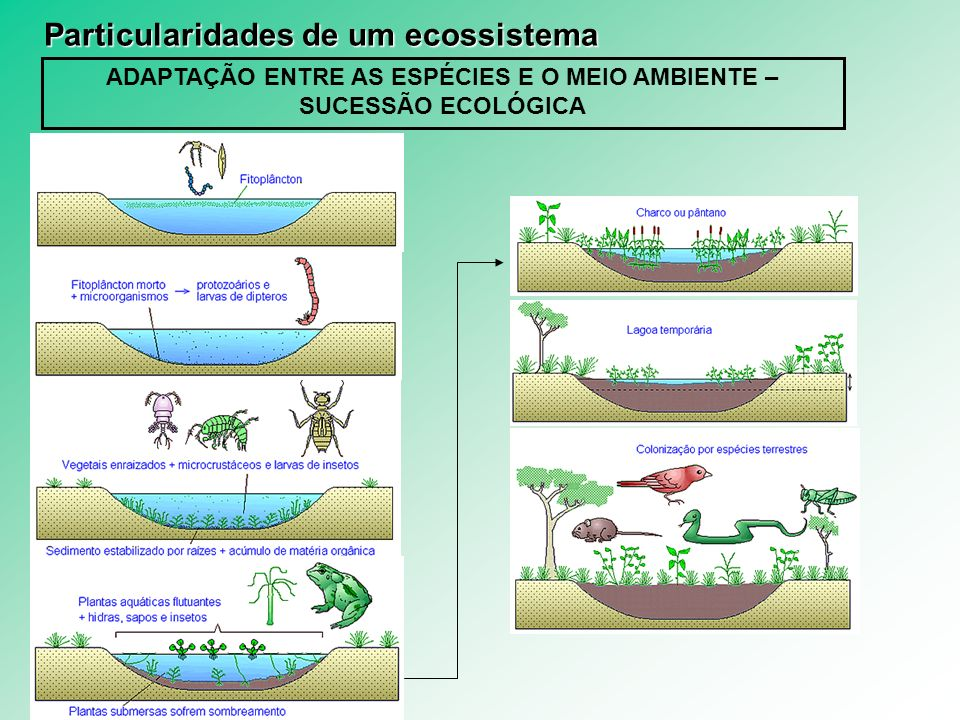 ADAPTAÇÃO ENTRE AS ESPÉCIES E O MEIO AMBIENTE – SUCESSÃO ECOLÓGICA Particularidades de um ecossistema