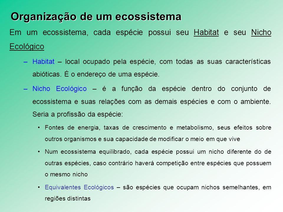 CADEIA ALIMENTAR – arranjo produtor-consumidor.