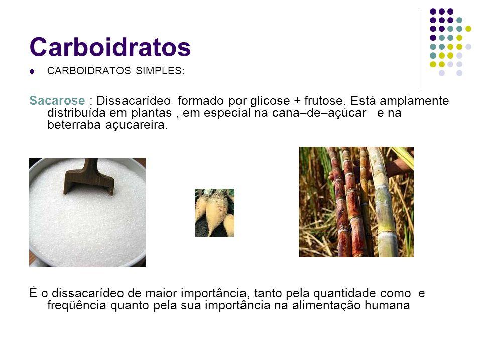 Carboidratos CARBOIDRATOS SIMPLES: Sacarose : Dissacarídeo formado por glicose + frutose. Está amplamente distribuída em plantas, em especial na cana–
