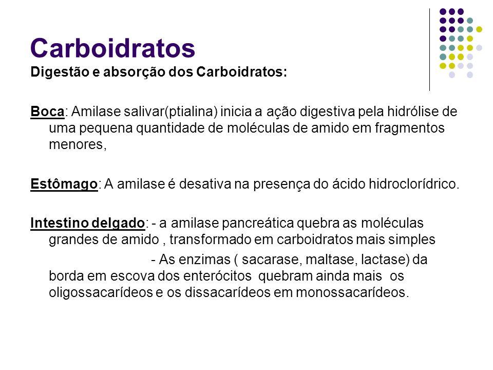 Carboidratos Digestão e absorção dos Carboidratos: Boca: Amilase salivar(ptialina) inicia a ação digestiva pela hidrólise de uma pequena quantidade de