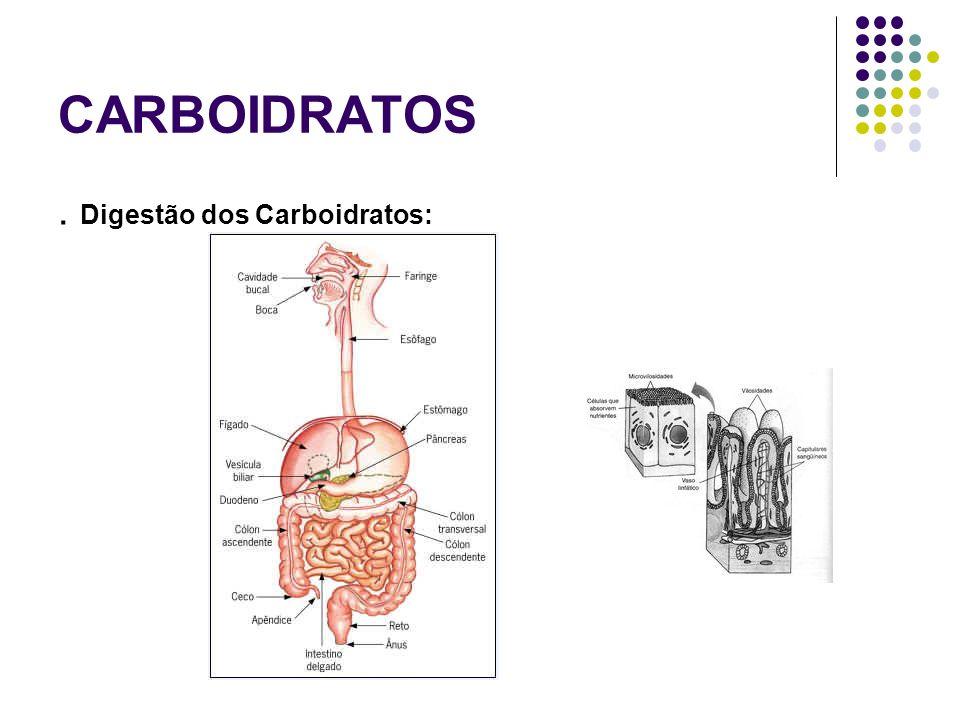 CARBOIDRATOS. Digestão dos Carboidratos: