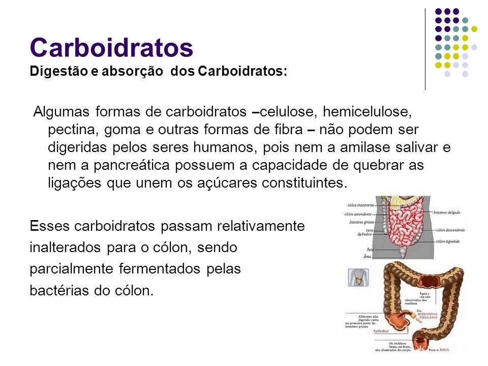 Carboidratos Digestão e absorção dos Carboidratos: Algumas formas de carboidratos –celulose, hemicelulose, pectina, goma e outras formas de fibra – nã