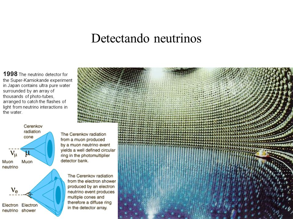 Detectando neutrinos 1998 The neutrino detector for the Super-Kamiokande experiment in Japan contains ultra pure water surrounded by an array of thous