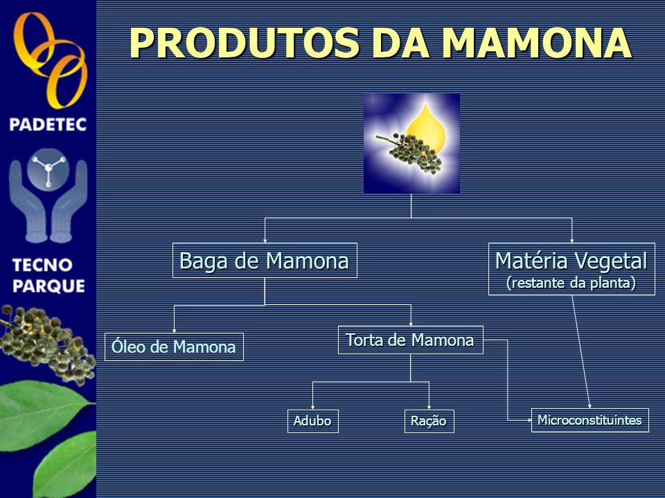 PRODUTOS DA MAMONA Baga de Mamona Matéria Vegetal (restante da planta) Torta de Mamona Óleo de Mamona Microconstituintes RaçãoAdubo