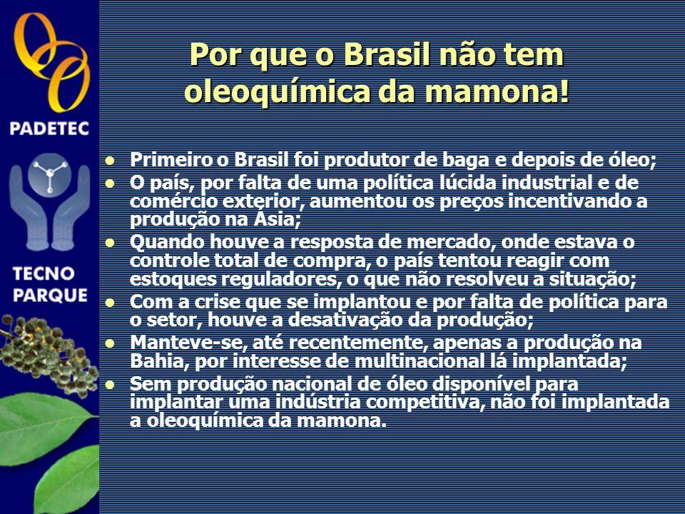 Por que o Brasil não tem oleoquímica da mamona! Primeiro o Brasil foi produtor de baga e depois de óleo; O país, por falta de uma política lúcida indu