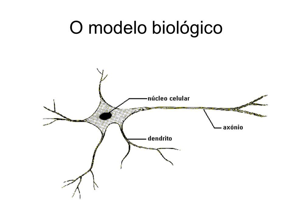 O modelo biológico