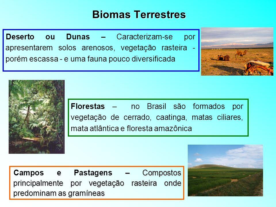 Biomas Terrestres – Compostos principalmente por vegetação rasteira onde predominam as gramíneas Campos e Pastagens – Compostos principalmente por veg