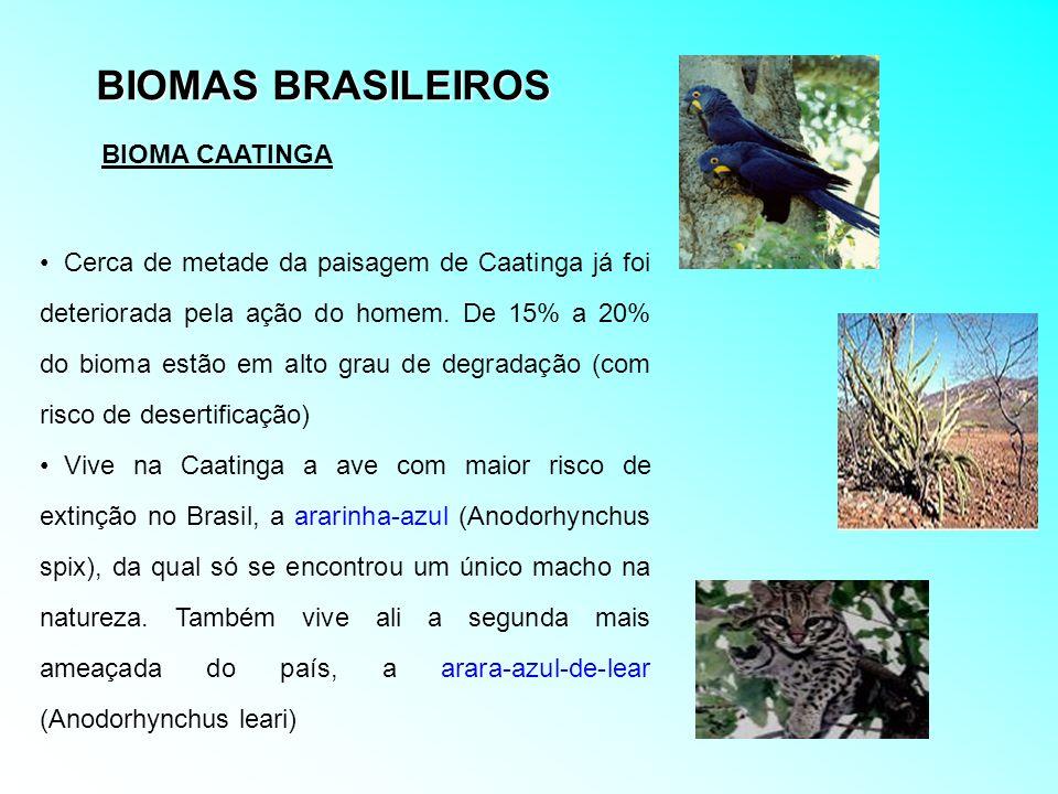 BIOMAS BRASILEIROS Cerca de metade da paisagem de Caatinga já foi deteriorada pela ação do homem. De 15% a 20% do bioma estão em alto grau de degradaç