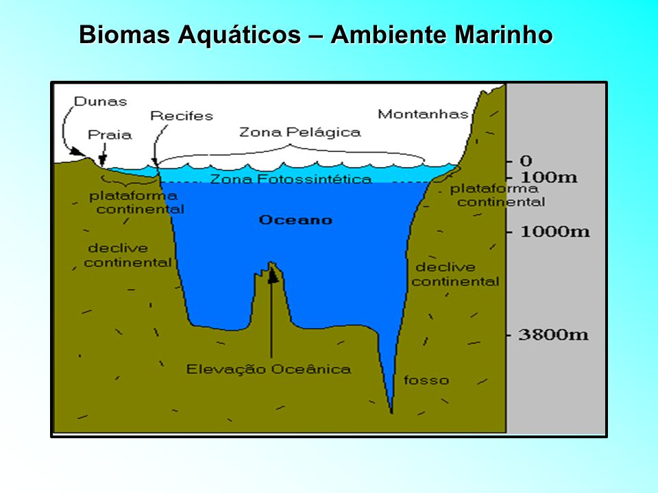 Biomas Aquáticos – Ambiente Marinho