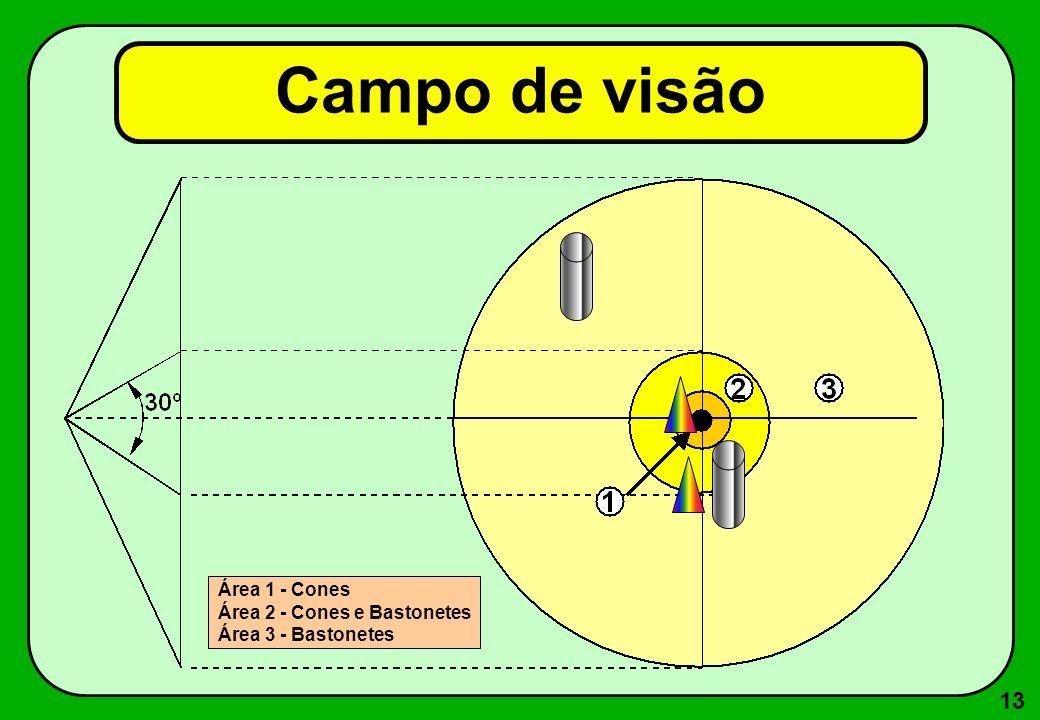 13 Campo de visão Área 1 - Cones Área 2 - Cones e Bastonetes Área 3 - Bastonetes