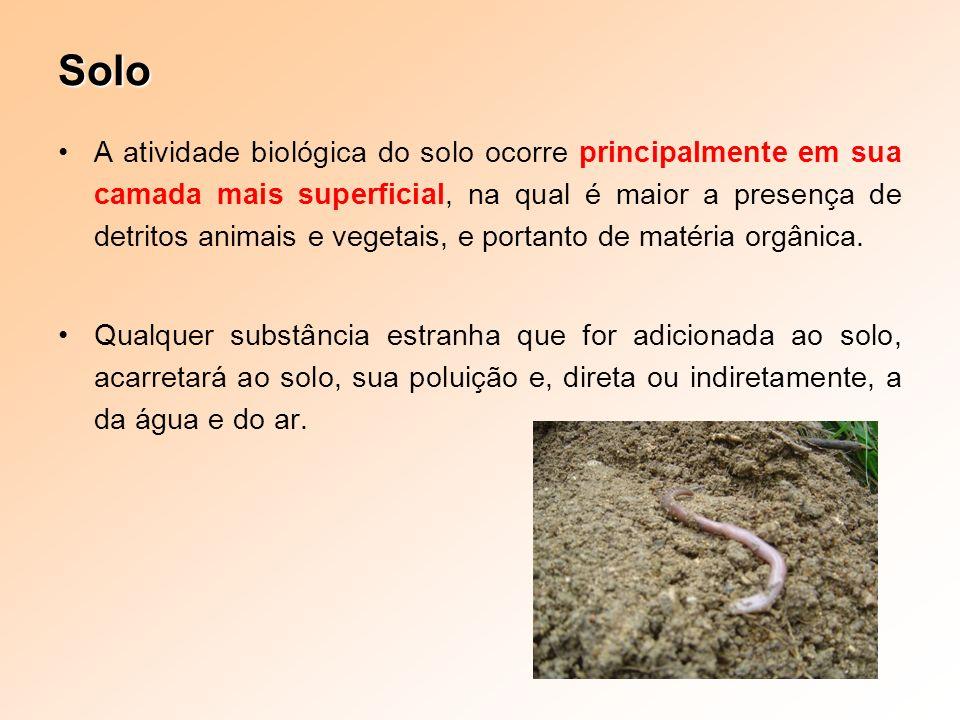 Solo A atividade biológica do solo ocorre principalmente em sua camada mais superficial, na qual é maior a presença de detritos animais e vegetais, e