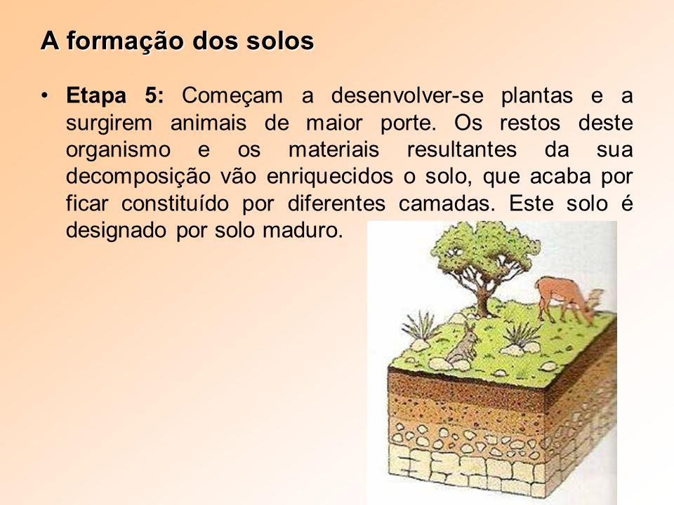 Etapa 5: Começam a desenvolver-se plantas e a surgirem animais de maior porte. Os restos deste organismo e os materiais resultantes da sua decomposiçã