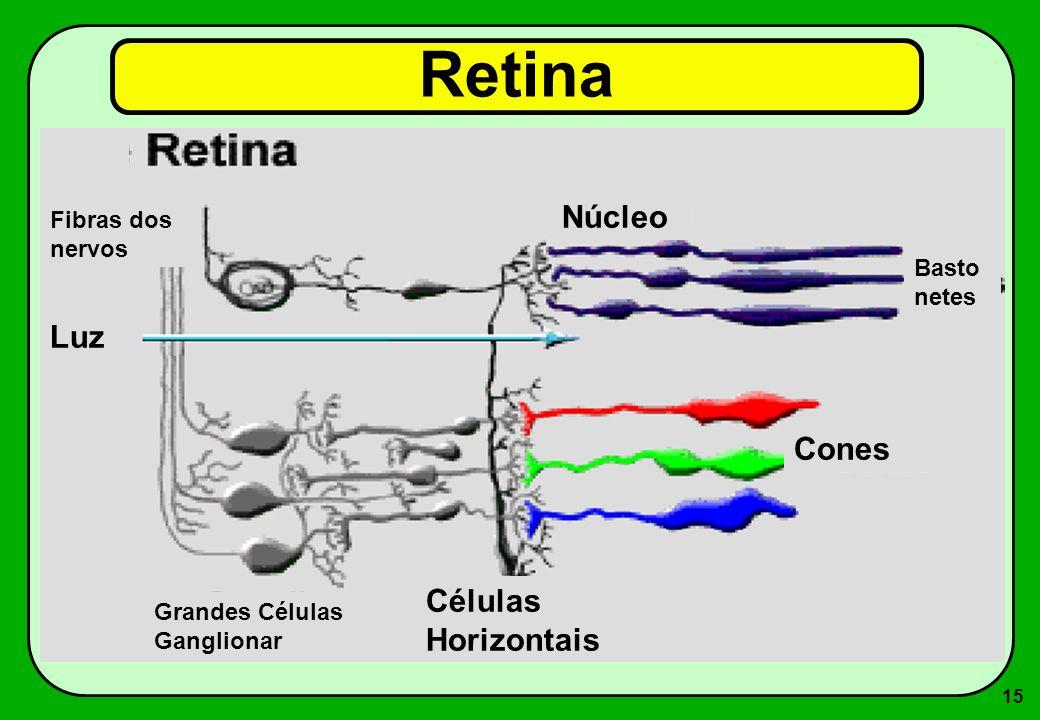 15 Retina Luz Fibras dos nervos Células Horizontais Cones Basto netes Núcleo Grandes Células Ganglionar