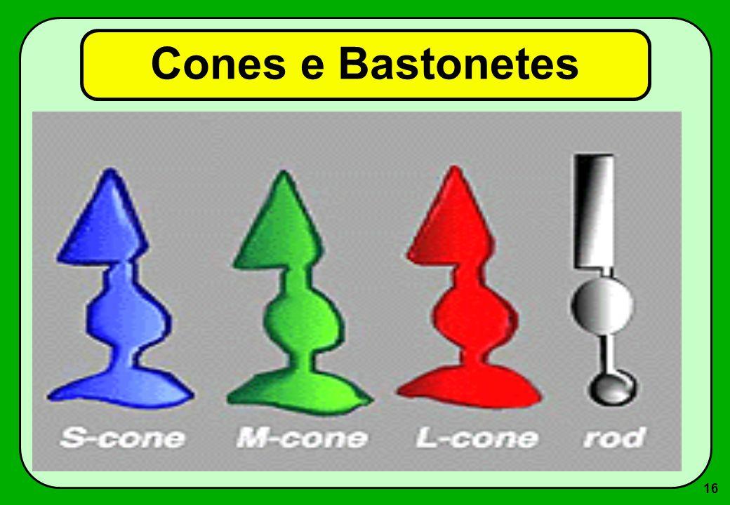 16 Cones e Bastonetes