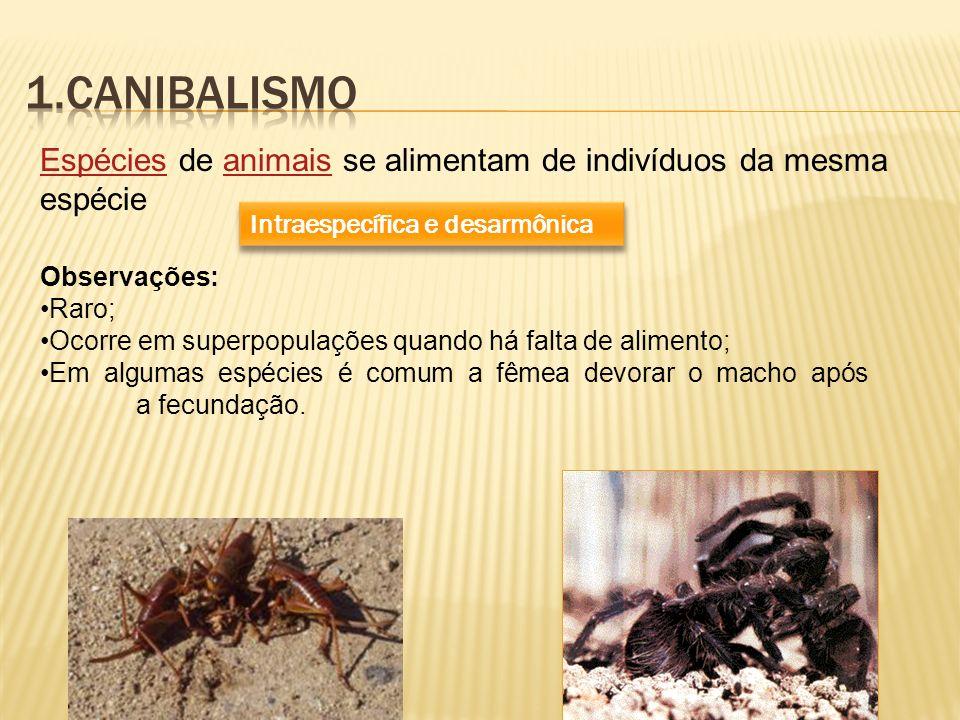 EspéciesEspécies de animais se alimentam de indivíduos da mesma espécieanimais Intraespecífica e desarmônica Observações: Raro; Ocorre em superpopulaç