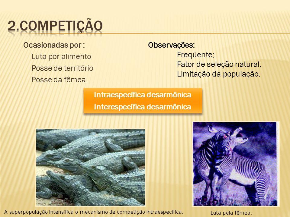 Ocasionadas por : Luta por alimento Posse de território Posse da fêmea. Intraespecífica desarmônica Interespecífica desarmônica Intraespecífica desarm