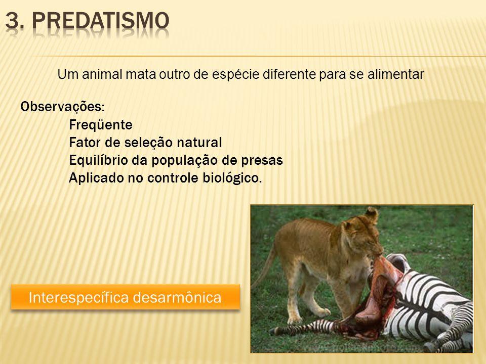 Um animal mata outro de espécie diferente para se alimentar Interespecífica desarmônica Observações: Freqüente Fator de seleção natural Equilíbrio da