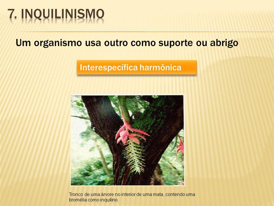 Um organismo usa outro como suporte ou abrigo Interespecífica harmônica Tronco de uma árvore no interior de uma mata, contendo uma bromélia como inqui
