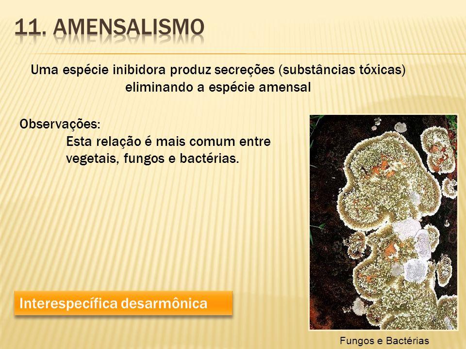 Uma espécie inibidora produz secreções (substâncias tóxicas) eliminando a espécie amensal Interespecífica desarmônica Observações: Esta relação é mais