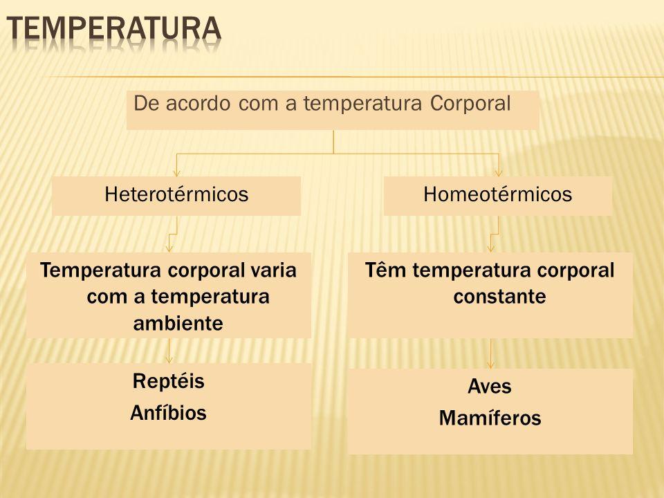 De acordo com a temperatura Corporal HeterotérmicosHomeotérmicos Temperatura corporal varia com a temperatura ambiente Têm temperatura corporal consta