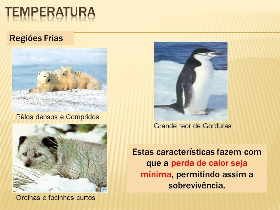 Regiões Frias Pêlos densos e Compridos Orelhas e focinhos curtos Grande teor de Gorduras Estas características fazem com que a perda de calor seja mín