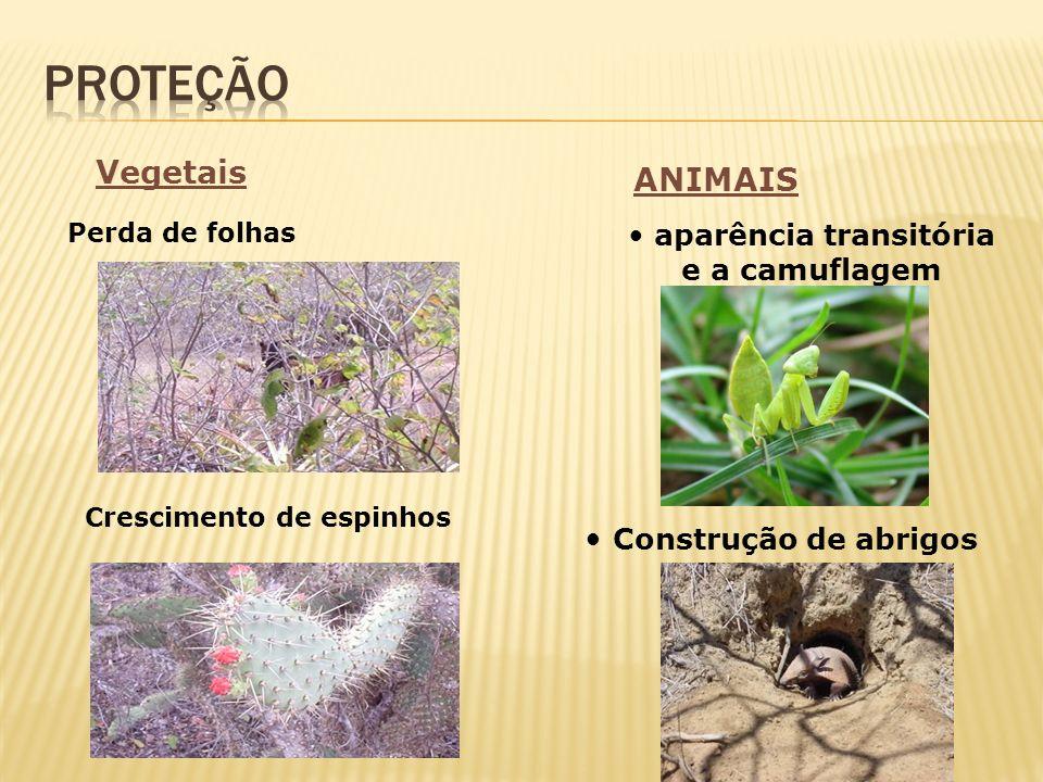 Vegetais Crescimento de espinhos Perda de folhas aparência transitória e a camuflagem Construção de abrigos ANIMAIS