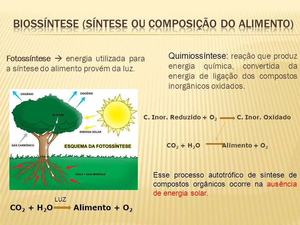 Fotossíntese energia utilizada para a síntese do alimento provém da luz. CO 2 + H 2 O Alimento + O 2 LUZ Quimiossíntese: reação que produz energia quí