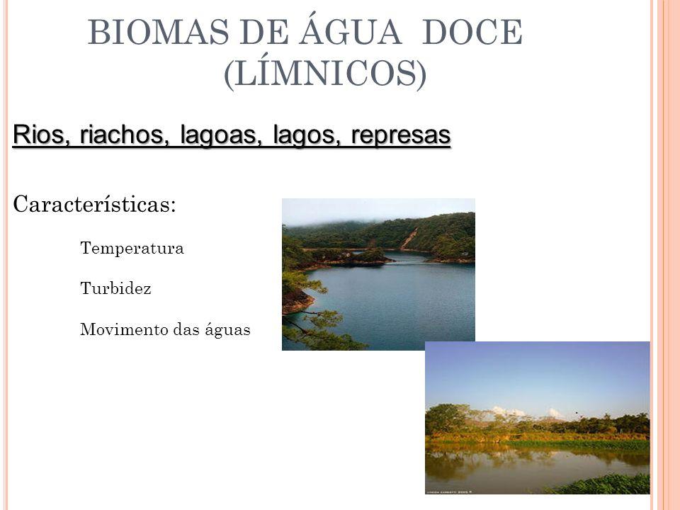 Ecossistemas Lênticos: Ecossistemas de águas paradas.