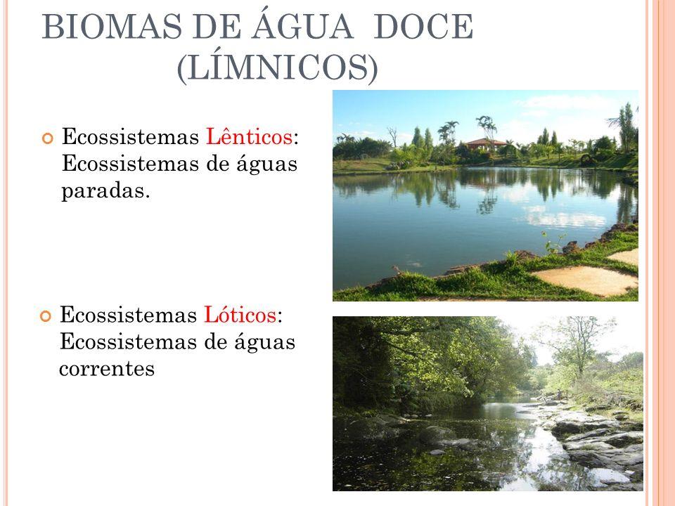 Patrimônio natural do Brasil É a maior área úmida continental do planeta; grande biodiversidade; possui chuvas fortes e comuns; As cheias chegam a cobrir até 2/3 da área pantaneira; Região pouco explorada, mas que sofre com a agricultura, construção de hidroelétricas, garimpos e a caça BIOMA PANTANAL