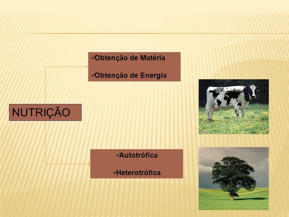 NUTRIÇÃO Obtenção de Matéria Obtenção de Energia Autotrófica Heterotrófica