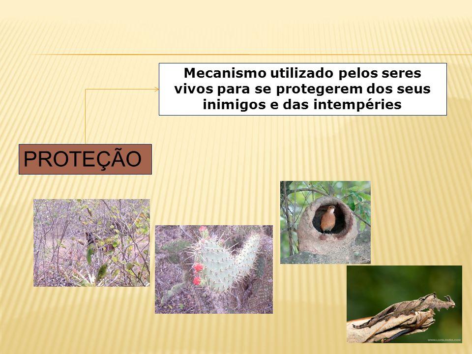 PROTEÇÃO Mecanismo utilizado pelos seres vivos para se protegerem dos seus inimigos e das intempéries