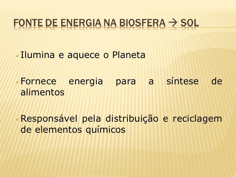 Ilumina e aquece o Planeta Fornece energia para a síntese de alimentos Responsável pela distribuição e reciclagem de elementos químicos