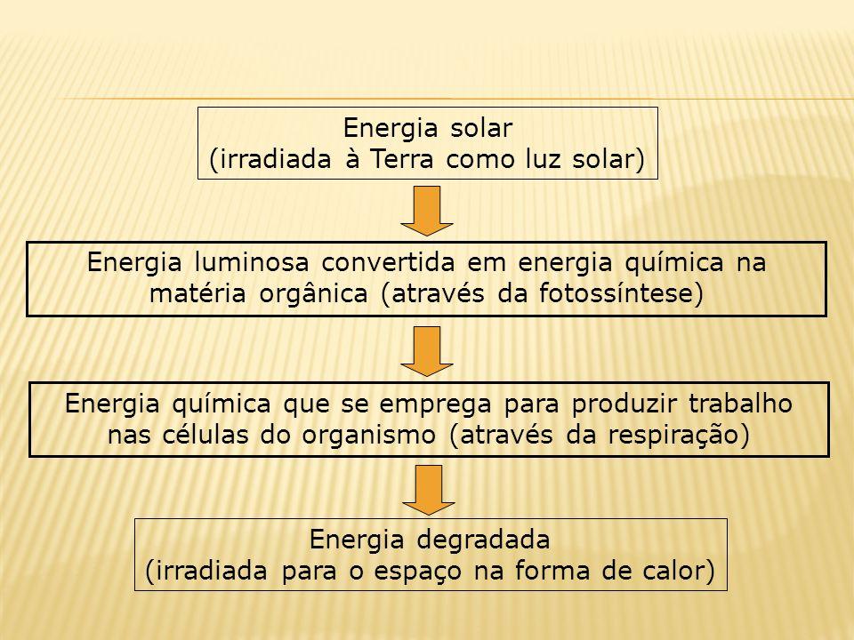 Energia solar (irradiada à Terra como luz solar) Energia luminosa convertida em energia química na matéria orgânica (através da fotossíntese) Energia química que se emprega para produzir trabalho nas células do organismo (através da respiração) Energia degradada (irradiada para o espaço na forma de calor)