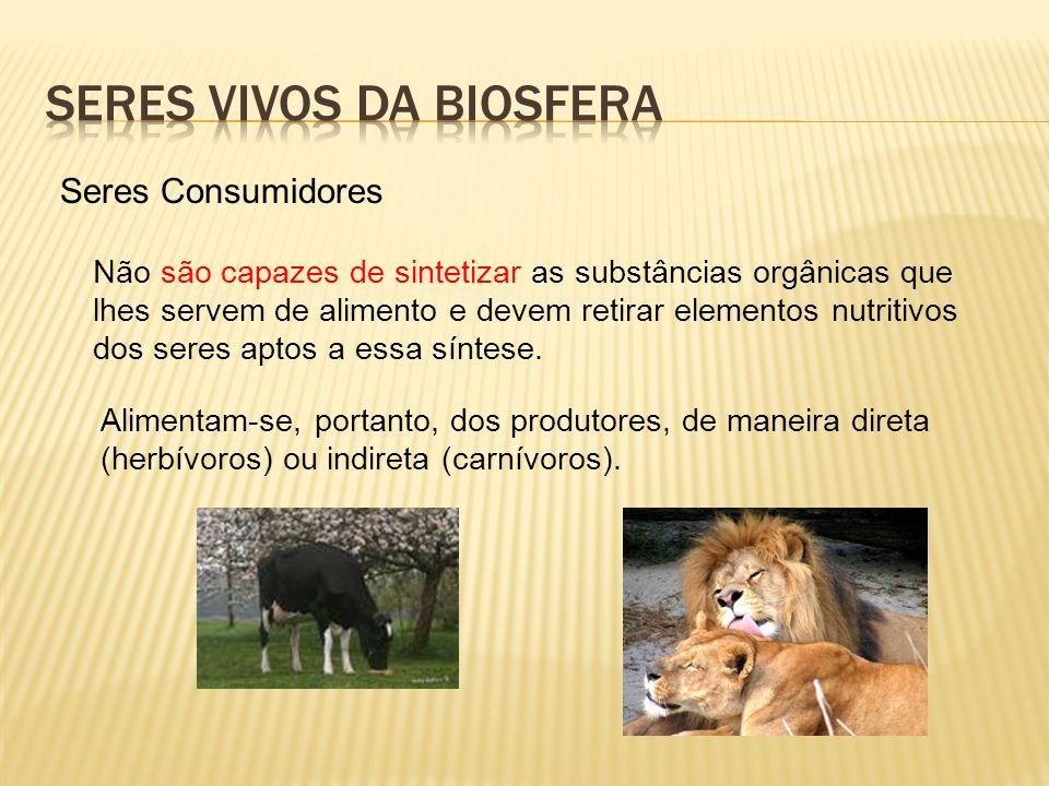 Biosfera resultado de fenômenos físicos associados à própria atividade biológica Encontra-se em constante modificação (fragilidade)