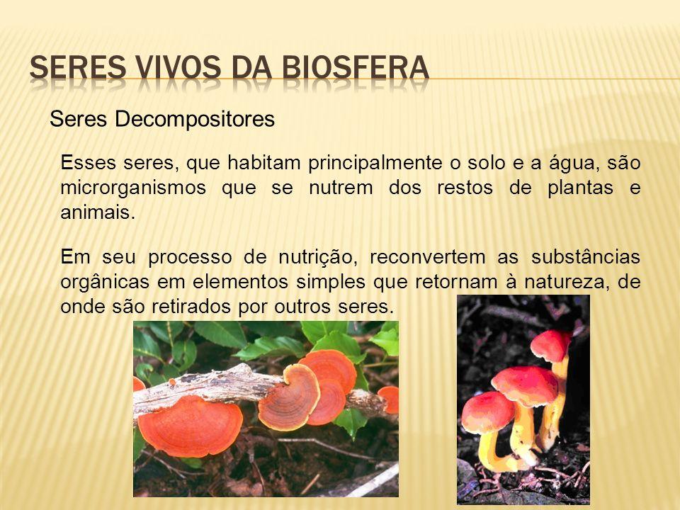 Seres Decompositores Esses seres, que habitam principalmente o solo e a água, são microrganismos que se nutrem dos restos de plantas e animais.