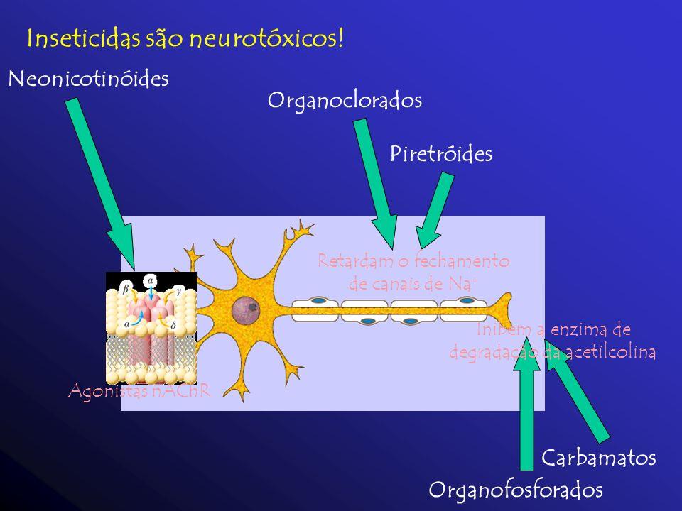 Inseticidas são neurotóxicos! Organoclorados Piretróides Retardam o fechamento de canais de Na + Organofosforados Carbamatos Inibem a enzima de degrad