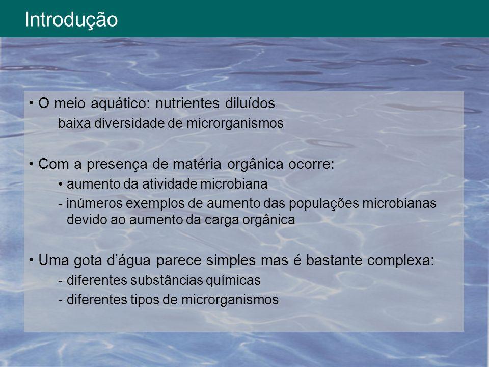 Introdução O meio aquático: nutrientes diluídos baixa diversidade de microrganismos Com a presença de matéria orgânica ocorre: aumento da atividade mi