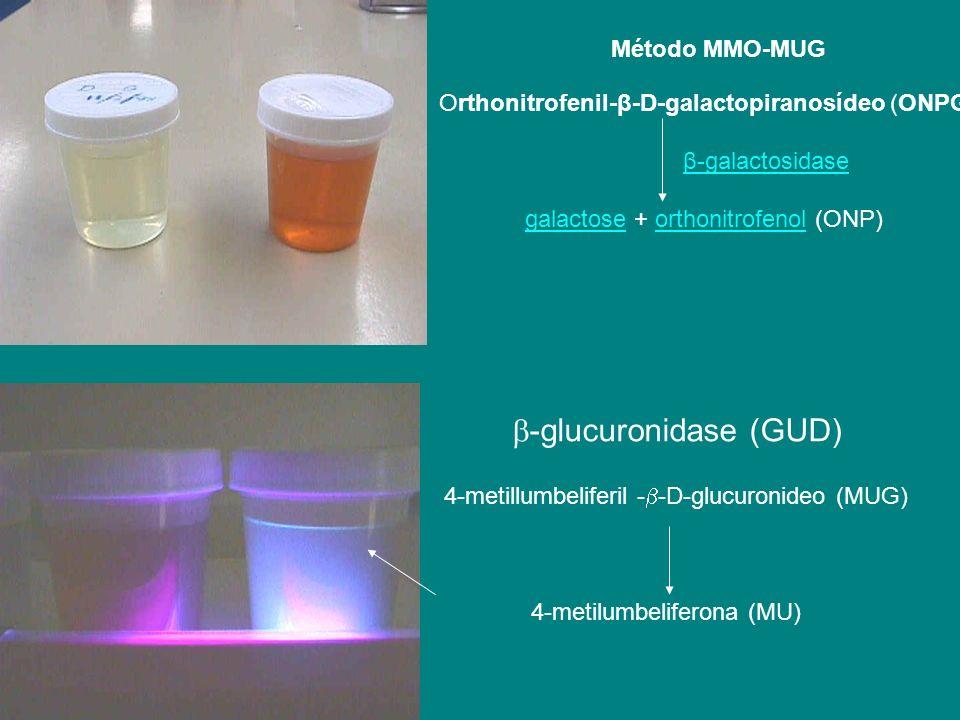 Método MMO-MUG -glucuronidase (GUD) 4-metillumbeliferil - -D-glucuronideo (MUG) 4-metilumbeliferona (MU) Orthonitrofenil-β-D-galactopiranosídeo (ONPG)