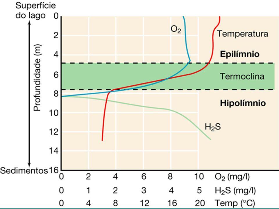 Pressão hidrostática –pressão no fundo de uma coluna dágua: 1 atm/10 m - no fundo dos oceanos é enorme: –danos às células –mas, BAROFÍLICOS, encontrados a 2500 m de profundidade.