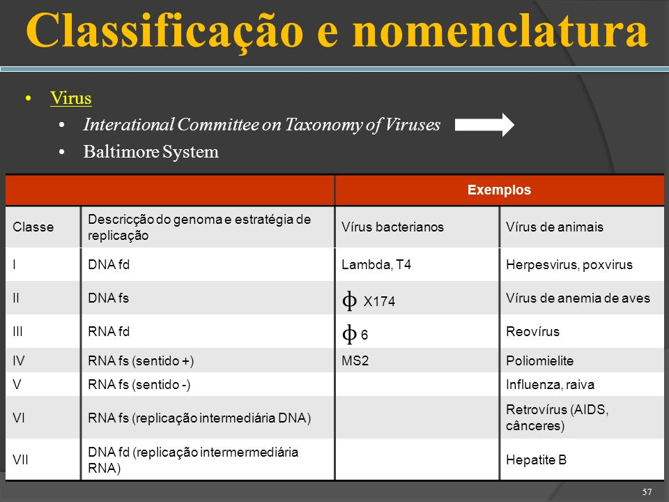 Virus Interational Committee on Taxonomy of Viruses Baltimore System 57 Classificação e nomenclatura Exemplos Classe Descricção do genoma e estratégia