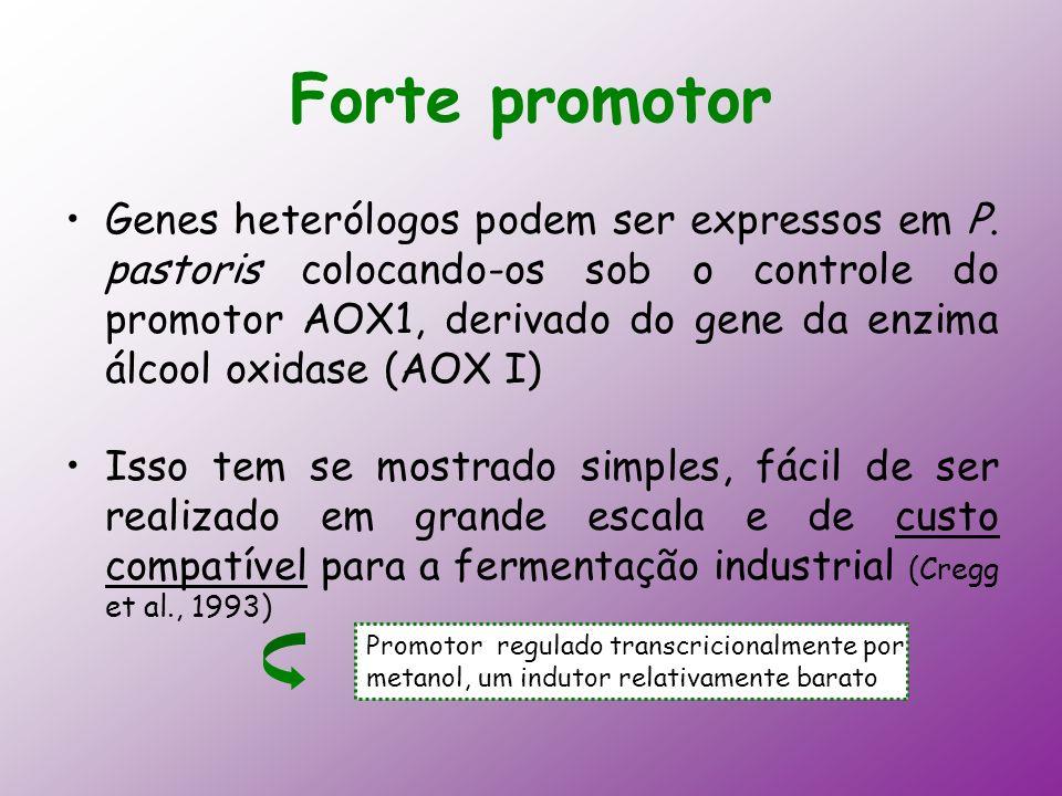 Forte promotor Genes heterólogos podem ser expressos em P. pastoris colocando-os sob o controle do promotor AOX1, derivado do gene da enzima álcool ox