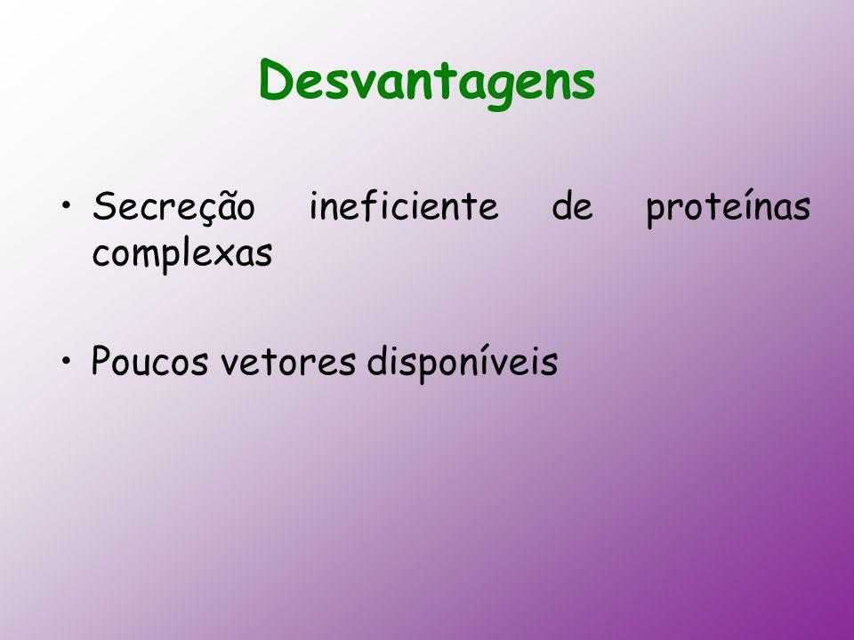 Desvantagens Secreção ineficiente de proteínas complexas Poucos vetores disponíveis