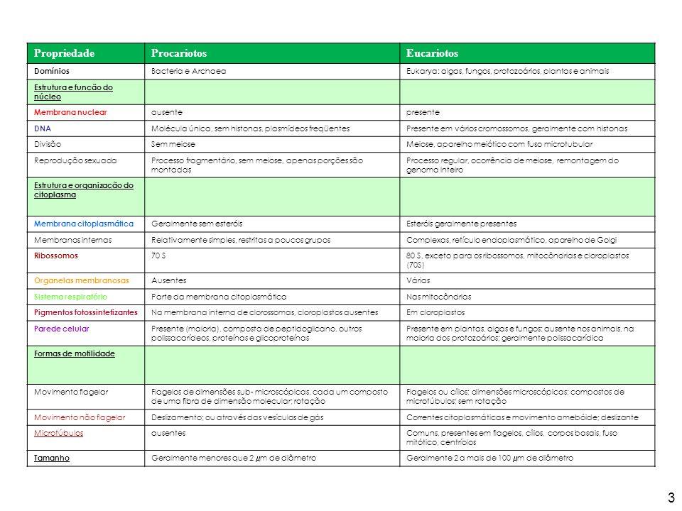 Comparação entre os lipídeos de Archaea e Bacteria Madigan et al., 2004 24