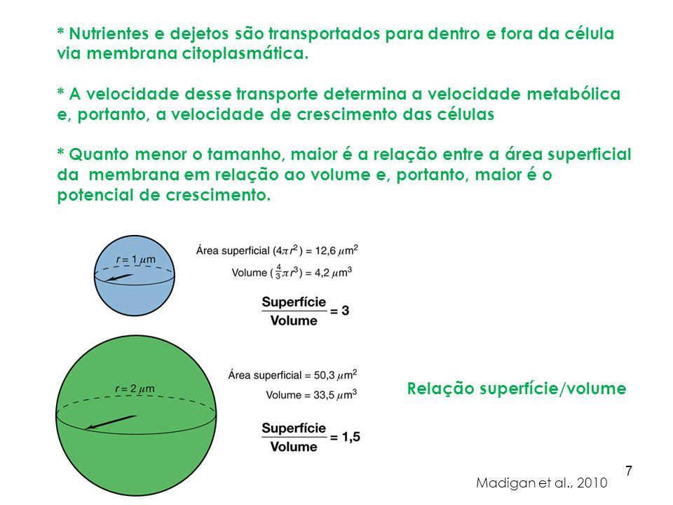 Cocos ( Neisseria ) Bacilos ( Halobacterium / Salmonella ) Vibrião ( Bdellovibrio ) Morfologia dos procariotos Vibrião 8 Formas mais básicas e comuns